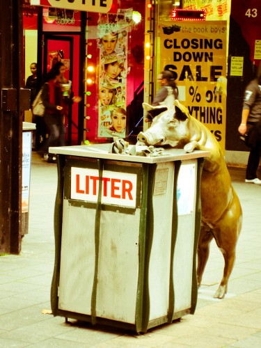 Rundle Mall Pigs